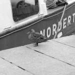 Nordertor_Img_1